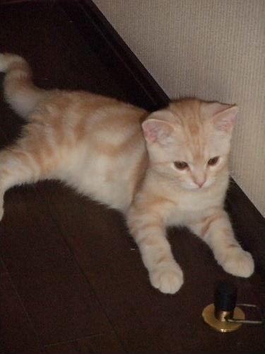 2008_1213圭太2008年12月3日0065.JPG