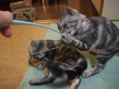 2009年11月獣毛再3.JPG