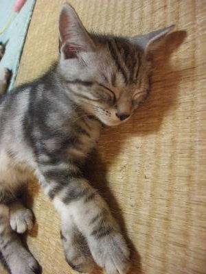 2009年11月眠い2.JPG