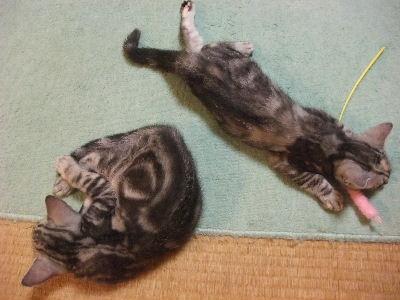 2009年11月眠い5.JPG