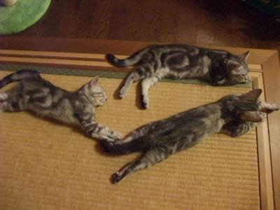 2009年11月眠い7.JPG