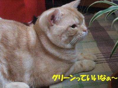 2009年6月かん5.JPG