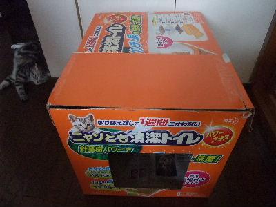 2009年7月産箱7.JPG