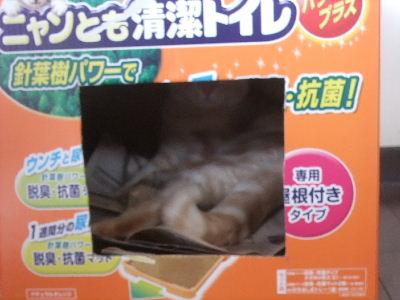 2009年7月産箱9.JPG