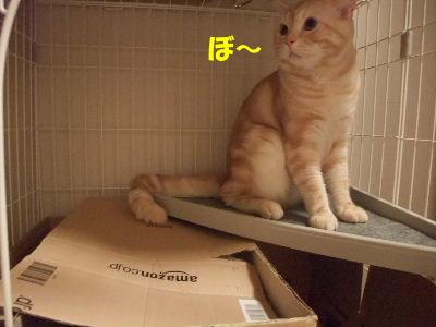 2009年7月2号2.JPG