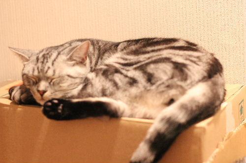 2010年10月取り合い4.JPG