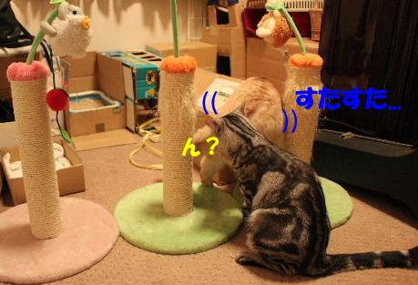 2010年10月遊ニャン2-2.JPG
