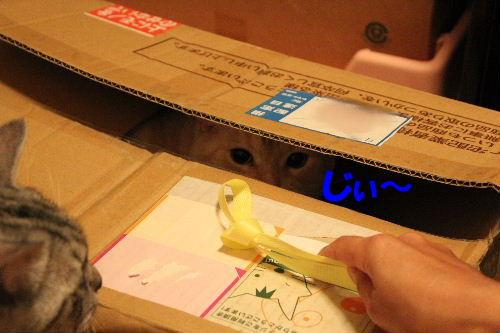 2010年10月遊ニャン3.JPG