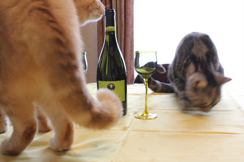 2010年11月ワイン0.JPG