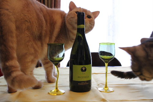 2010年11月ワイン1.JPG