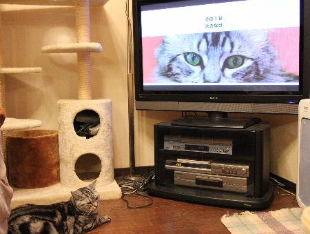 2010年12月テレ3.JPG