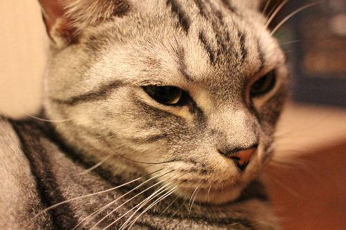 2010年12月誕3-6.JPG