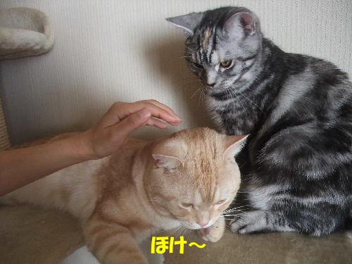 2010年1月きば1.JPG