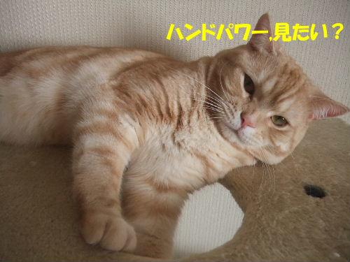 2010年1月きば3.JPG