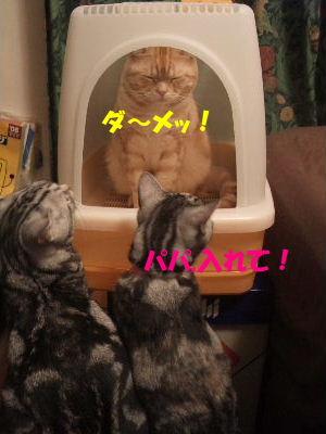 2010年1月トイレ1.JPG