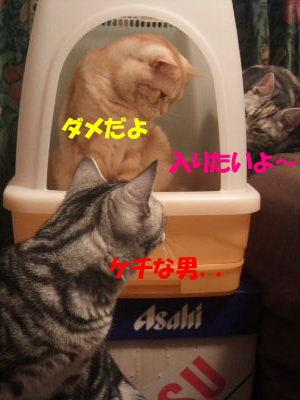 2010年1月トイレ2.JPG