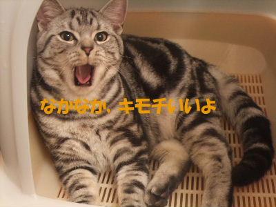 2010年1月トイレ5.JPG