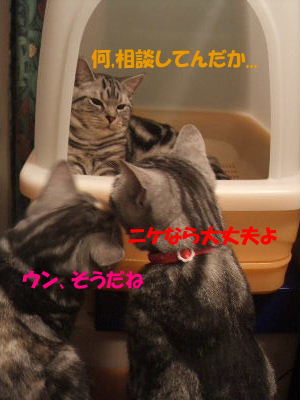 2010年1月トイレ6.JPG