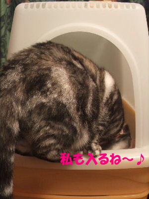 2010年1月トイレ8.JPG