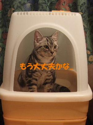 2010年1月トイレ9-2.JPG