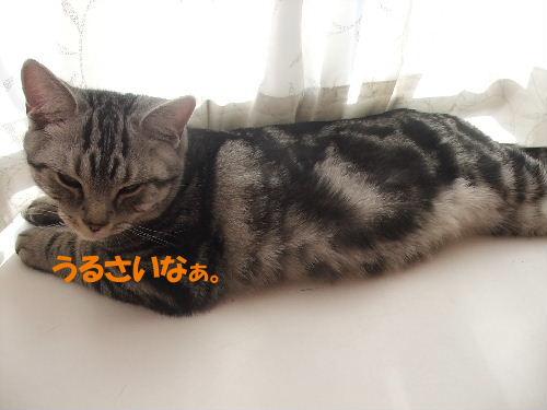 2010年1月ニケ寝7.JPG