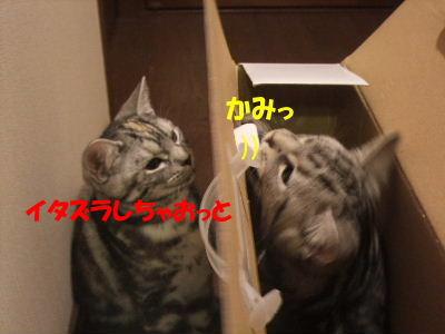 2010年1月ヘルス箱4.JPG