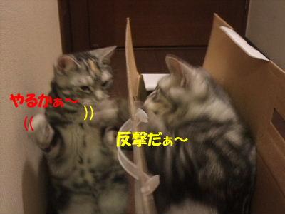 2010年1月ヘルス箱6.JPG