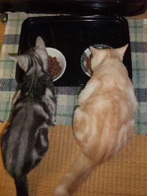 2010年1月圭太食事7.JPG