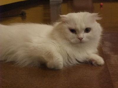 2010年1月猫カフェ8.JPG