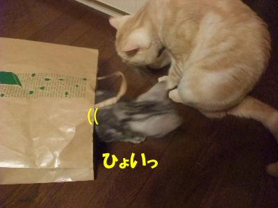 2010年1月紙袋2.JPG