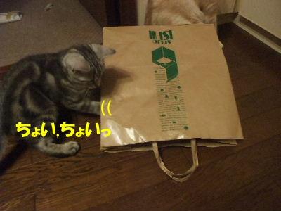 2010年1月紙袋3.JPG