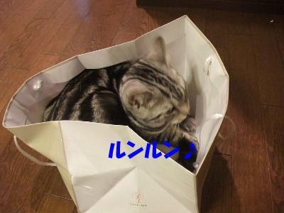 2010年2月ねんりんやリ5.JPG