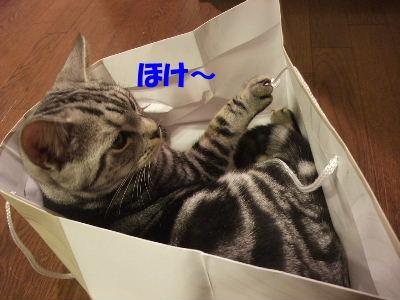 2010年2月ねんりんやリ6.JPG