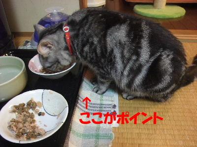 2010年2月食い倒れ8.JPG