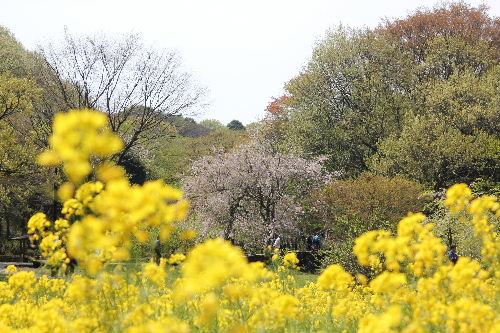 2010年4月四季5.JPG