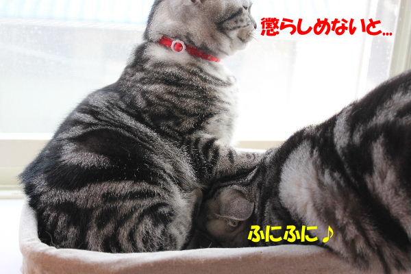 2010年5月ミルク3.JPG