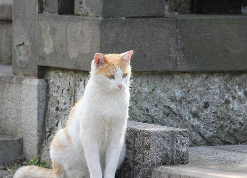 2010年5月谷中1-23.JPG