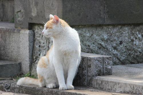 2010年5月谷中1-24.JPG