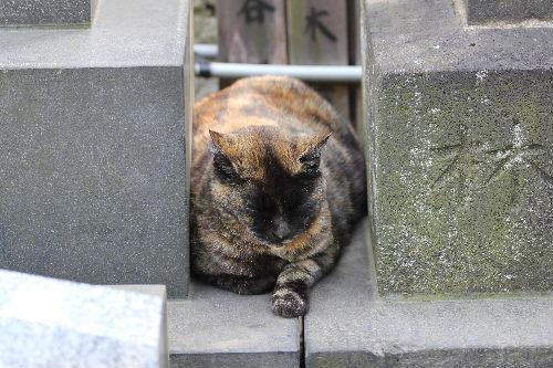 2010年5月谷中1-32.JPG