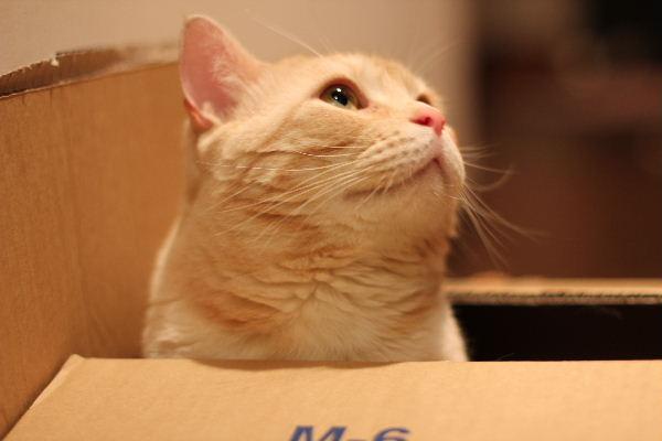 2010年6月BOX5.JPG