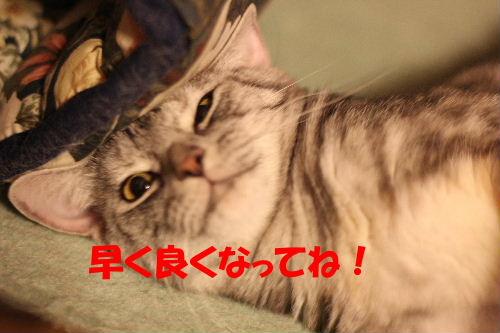 2010年8月かえ6.JPG