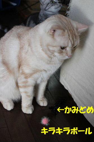 2010年9月おの3.JPG