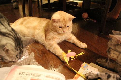 2010年9月きもち6.JPG