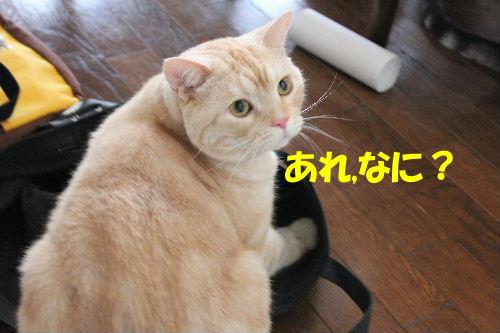 2010年9月バック3-2.JPG