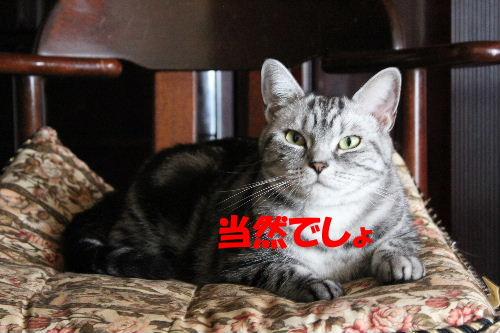2010年9月女王6.JPG