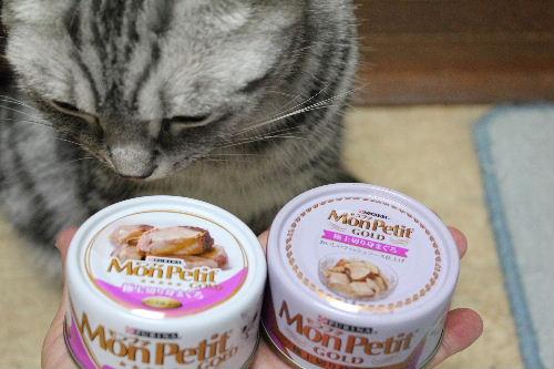 2010年9月子猫缶5.JPG