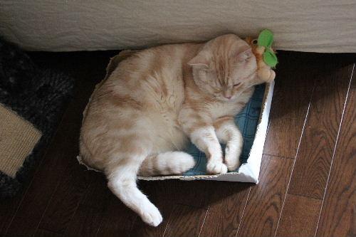 2010年9月枕1.JPG