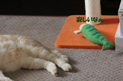2011年10月えさ2-2.JPG