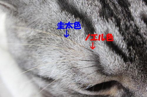 2011年10月かえ3-5.JPG