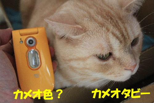 2011年10月よい1.JPG